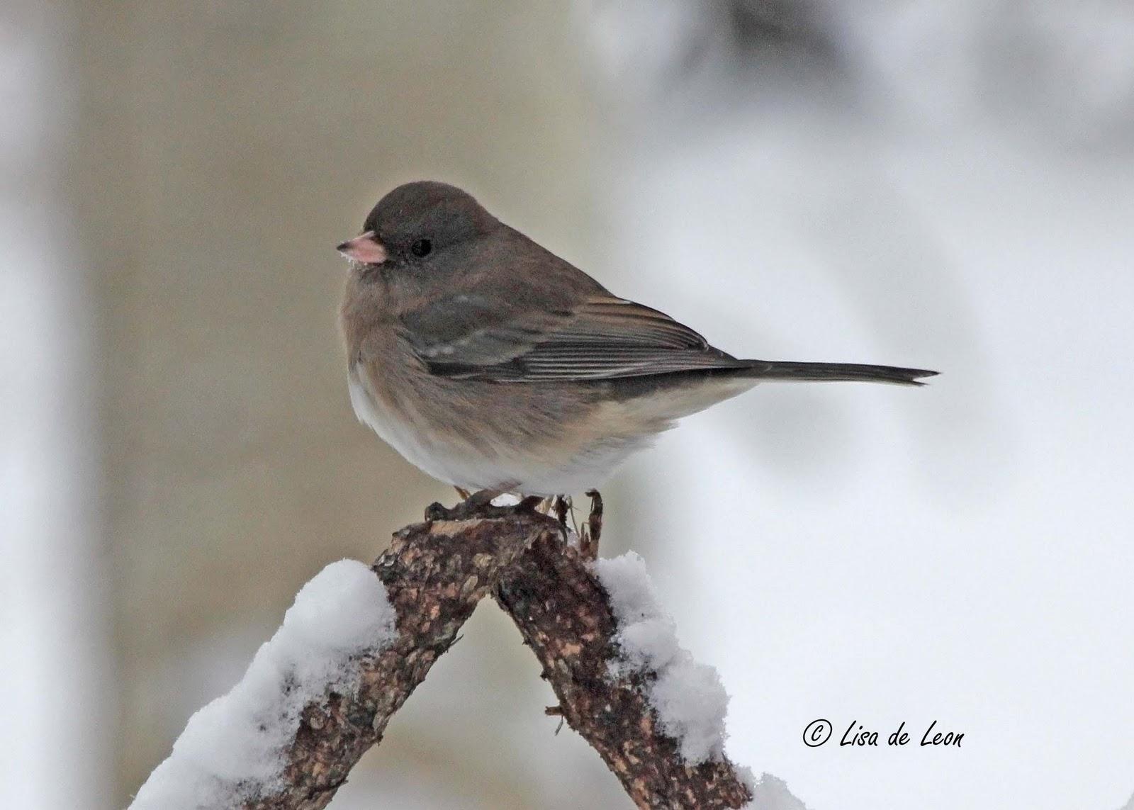 snowbird services rentals in bend